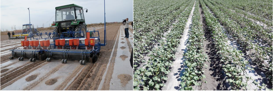 The benefits and challenge of plastic film mulching in China | World