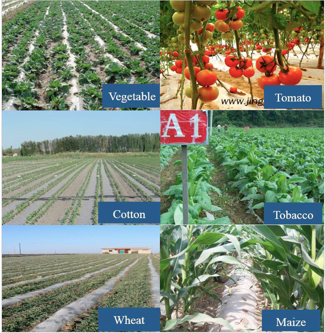 The benefits and challenge of plastic film mulching in China