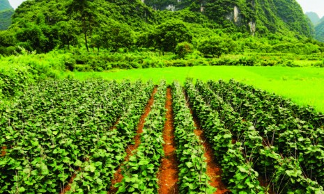 food production and poverty Rapid growth in biofuel production will continue to influence food prices and this in turn will have an impact on food security in 2006, fao estimated that some 850 million people around the world were undernourished.
